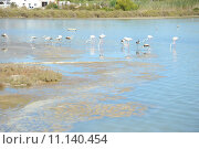 Купить «flamingos carotinoiden phoenicopteridae phoenicopteriformes rosafarbene», фото № 11140454, снято 25 марта 2019 г. (c) PantherMedia / Фотобанк Лори