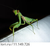 Купить «nature night insect hunter nighttime», фото № 11149726, снято 20 сентября 2019 г. (c) PantherMedia / Фотобанк Лори