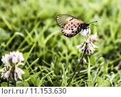 Купить «nature animals butterfly clover green», фото № 11153630, снято 17 июня 2019 г. (c) PantherMedia / Фотобанк Лори