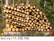 Купить «Nachwachsender Rohstoff Holz», фото № 11158106, снято 23 мая 2019 г. (c) PantherMedia / Фотобанк Лори