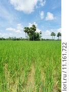 Купить «nature asia scenery countryside rice», фото № 11161722, снято 22 июля 2019 г. (c) PantherMedia / Фотобанк Лори