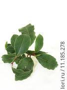Купить «food green plant bright traditional», фото № 11185278, снято 22 февраля 2019 г. (c) PantherMedia / Фотобанк Лори