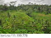 Купить «Bali ricefield  Indonesia Ubud Bali», фото № 11199778, снято 18 февраля 2019 г. (c) PantherMedia / Фотобанк Лори