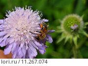 Купить «blossom bloom insect bee flourish», фото № 11267074, снято 16 октября 2019 г. (c) PantherMedia / Фотобанк Лори