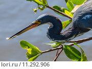 Купить «nature wildlife bird birds florida», фото № 11292906, снято 6 июля 2020 г. (c) PantherMedia / Фотобанк Лори