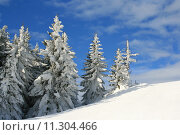 Купить «wither trees with a lot of snow», фото № 11304466, снято 18 сентября 2018 г. (c) PantherMedia / Фотобанк Лори