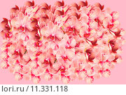 Купить «Very big bunch of spotted orchid flowers», фото № 11331118, снято 21 сентября 2019 г. (c) PantherMedia / Фотобанк Лори