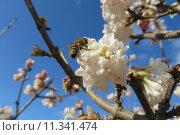 Купить «insect pollen bee flavour shrub», фото № 11341474, снято 16 октября 2019 г. (c) PantherMedia / Фотобанк Лори