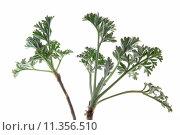 Купить «isolated plant page sheet optional», фото № 11356510, снято 20 июня 2019 г. (c) PantherMedia / Фотобанк Лори