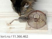 Купить «cat mouse catch trap pussycat», фото № 11366462, снято 5 декабря 2019 г. (c) PantherMedia / Фотобанк Лори