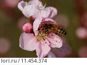Купить «close up macro spring insect», фото № 11454374, снято 16 октября 2019 г. (c) PantherMedia / Фотобанк Лори