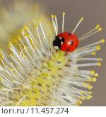 Купить «close up macro spring insect», фото № 11457274, снято 16 октября 2019 г. (c) PantherMedia / Фотобанк Лори