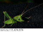 Купить «animal spring jump insect jumping», фото № 11474974, снято 16 октября 2019 г. (c) PantherMedia / Фотобанк Лори