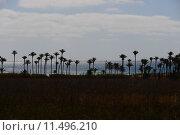 Купить «oasis,desert,palms,mirage,», фото № 11496210, снято 23 июля 2018 г. (c) PantherMedia / Фотобанк Лори