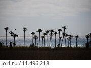 Купить «oasis,desert,palms,mirage,», фото № 11496218, снято 23 июля 2018 г. (c) PantherMedia / Фотобанк Лори