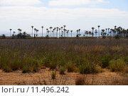 Купить «oasis,desert,palms,mirage,», фото № 11496242, снято 17 октября 2018 г. (c) PantherMedia / Фотобанк Лори