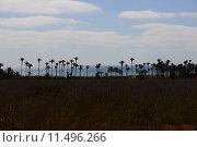 Купить «oasis,desert,palms,mirage,», фото № 11496266, снято 17 октября 2018 г. (c) PantherMedia / Фотобанк Лори