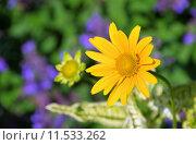 Купить «green close up summer yellow», фото № 11533262, снято 14 ноября 2018 г. (c) PantherMedia / Фотобанк Лори