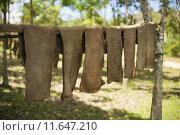 Купить «Rubber sheet drying outdoor in local rubber factory», фото № 11647210, снято 20 июня 2019 г. (c) PantherMedia / Фотобанк Лори