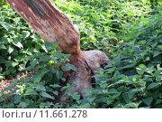 Купить «tree trunk damage damages detriments», фото № 11661278, снято 19 марта 2019 г. (c) PantherMedia / Фотобанк Лори