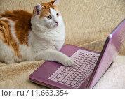 Купить «Internet for Cats», фото № 11663354, снято 21 февраля 2019 г. (c) PantherMedia / Фотобанк Лори