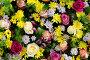 Фон из разных разноцветных цветов и растений, фото № 11744570, снято 27 августа 2015 г. (c) Наталья Волкова / Фотобанк Лори