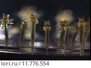 insects midges spawn blood sucker. Стоковое фото, фотограф Helmut Feil / PantherMedia / Фотобанк Лори