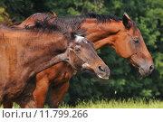 Купить «animal mammal horse ride gallop», фото № 11799266, снято 21 марта 2019 г. (c) PantherMedia / Фотобанк Лори