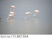 Купить «flamingos carotinoiden phoenicopteridae phoenicopteriformes pigmente», фото № 11867554, снято 25 марта 2019 г. (c) PantherMedia / Фотобанк Лори