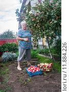 Купить «Пожилая женщина у яблоневого дерева. Сбор урожая», эксклюзивное фото № 11884226, снято 16 августа 2015 г. (c) Наталья Федорова / Фотобанк Лори