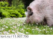 Купить «nature smiling smile green animal», фото № 11907790, снято 25 мая 2019 г. (c) PantherMedia / Фотобанк Лори