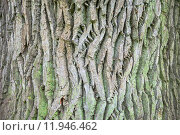 Купить «Close up of the tree bark with green moss», фото № 11946462, снято 15 ноября 2018 г. (c) PantherMedia / Фотобанк Лори