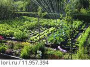 Купить «nature garden vegetable eco gardens», фото № 11957394, снято 26 июня 2019 г. (c) PantherMedia / Фотобанк Лори