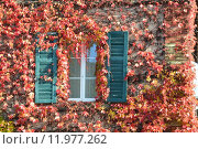 Купить «window facade shutter tendrils shutters», фото № 11977262, снято 22 января 2019 г. (c) PantherMedia / Фотобанк Лори