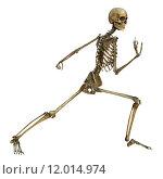 Купить «Human Skeleton», фото № 12014974, снято 19 августа 2018 г. (c) PantherMedia / Фотобанк Лори