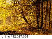Купить «Autumn forest», фото № 12027634, снято 27 марта 2019 г. (c) PantherMedia / Фотобанк Лори