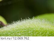 Купить «natural water drop on plant in morning», фото № 12069762, снято 23 февраля 2019 г. (c) PantherMedia / Фотобанк Лори