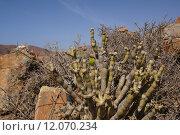 Купить «plant blossom bloom botany desert», фото № 12070234, снято 19 сентября 2019 г. (c) PantherMedia / Фотобанк Лори