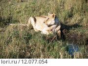 Купить «nature green animal holiday sport», фото № 12077054, снято 21 марта 2019 г. (c) PantherMedia / Фотобанк Лори