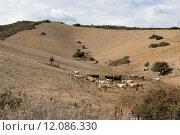 Купить «agriculture farming climate livestock thirst», фото № 12086330, снято 21 февраля 2018 г. (c) PantherMedia / Фотобанк Лори