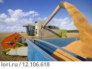 Купить «Combine harvesting wheat and filling trailer in sunny, rural field», фото № 12106618, снято 18 января 2018 г. (c) PantherMedia / Фотобанк Лори