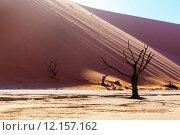 Купить «beautiful landscape of Hidden Vlei in Namib desert », фото № 12157162, снято 21 января 2019 г. (c) PantherMedia / Фотобанк Лори