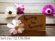 Купить «Label With Text Spring Has Sprung With Cosmea Blossoms», фото № 12176954, снято 19 сентября 2019 г. (c) PantherMedia / Фотобанк Лори