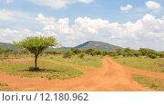Купить «Shrubs in the dry savannah grasslands of Botswana..», фото № 12180962, снято 21 января 2019 г. (c) PantherMedia / Фотобанк Лори