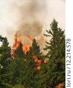 Купить «Coniferous forest in fire», фото № 12214578, снято 20 марта 2019 г. (c) PantherMedia / Фотобанк Лори