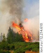 Купить «Coniferous forest in fire», фото № 12214610, снято 20 марта 2019 г. (c) PantherMedia / Фотобанк Лори