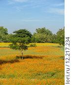 Cosmos flower field. Стоковое фото, фотограф Boonsom Chotpaiboonpun / PantherMedia / Фотобанк Лори