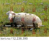 Купить «calendar for 2015 year with sheep on the background», фото № 12238390, снято 19 марта 2019 г. (c) PantherMedia / Фотобанк Лори