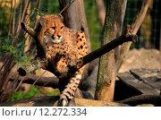Купить «nature animal park animals fauna», фото № 12272334, снято 22 мая 2019 г. (c) PantherMedia / Фотобанк Лори