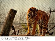 Купить «nature animal park animals fauna», фото № 12272734, снято 22 мая 2019 г. (c) PantherMedia / Фотобанк Лори
